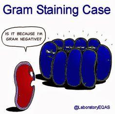 Bacterial Discrimination Issue -   Shame on you, gram-positives!!!