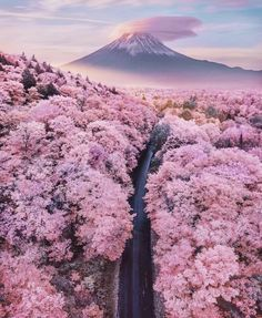 Truly Astounding Places To Visit In Japan Mt Fuji overlooking a sea of blossom trees - Japan - 15 Truly Astounding Places To Visit In Japan.Mt Fuji overlooking a sea of blossom trees - Japan - 15 Truly Astounding Places To Visit In Japan. Nature Aesthetic, Travel Aesthetic, Aesthetic Japan, Beige Aesthetic, Beautiful Places To Travel, Beautiful World, Wonderful Places, Amazing Places On Earth, Beautiful Beautiful