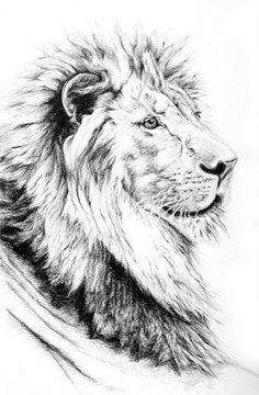 lion.JPG (262×400)