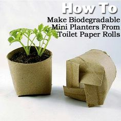 Recyclable, biodegradable, mini planters from toilet paper rolls