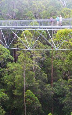 Tree Top Walk, in Karri forest near Walpole, Western Australia