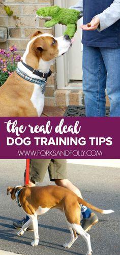 These pro dog traini