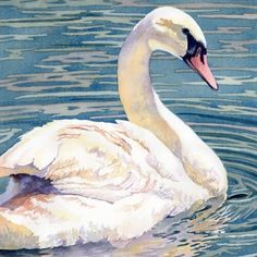 Animals Watercolor, Watercolor Pictures, Watercolor Bird, Watercolour Painting, Watercolor Sketch, Watercolours, Draw Tutorial, Swan Drawing, Swan Pictures