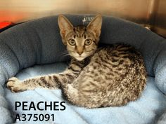 Adopted! Peaches has found her forever home. 8/12/15.