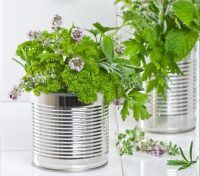 7301551 – fresh herbs in recycled tin cans with pestle and mortar in the kitchen Creative Birthday Ideas, Recycled Tin Cans, Ideal Tools, Tin Gifts, Golf Gifts, Novelty Items, Corporate Gifts, Fresh Herbs, Birthday Gifts