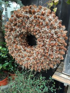Jul 2015 My stars! All those itty bitty pine cones. Fall Wreaths, Christmas Wreaths, Christmas Decorations, Christmas Ornaments, Holiday Decor, Acorn Wreath, Berry Wreath, Pine Cone Crafts, How To Make Wreaths