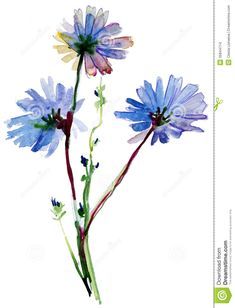 Blue Watercolor Flowers - Download From Over 27 Million High Quality Stock Photos, Images, Vectors. Sign up for FREE today. Image: 35844714