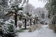 trachycarpus palm trees in Glengarriff, County Cork, winter of 2010. Creativity and inspirations from Ireland Kreativ-Alltag im blauen Cottage in Irland: Irland   Ireland