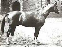 Abglanz.. warm blood stallion Hidden Acres Stallion References | Breeders of Hanoverian Foals from States Premium & Elite broodmares from bloodlines of Rubinstein, Weltmeyer, Donnerhall, Hohenstein