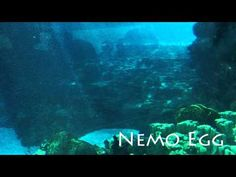 I needed something soft & uplifting this morning .... Finding Nemo Theme: Nemo Egg, Thomas Newman