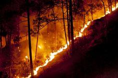 Forest Fires Shimla Hills, India