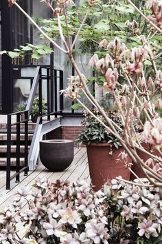 Perfect morning at the terrace of Stout&Co - Amsterdam #stout_co #terras #bedandbreakfast #amsterdam www.stout-co.com