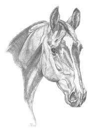 Image result for simple horse drawings in pencil