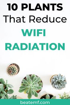 Cut Down On The Toxins In Your Home With These Air Purifying House Plants. These Are The Indoor Plants Studied By Nasa To Help Mitigate Radiation From Our Wireless Devices. In addition, Get Tips For Growing These Detoxifying Plants Indoors