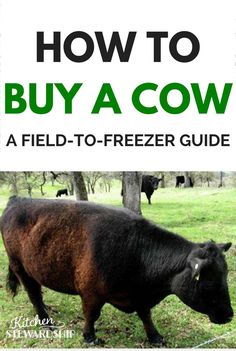 This how-to-buy-a-cow-guide has everything you need to know about getting quality beef from the field to your freezer.