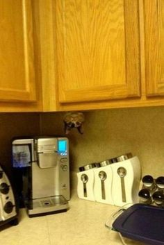 Spot the kitty!