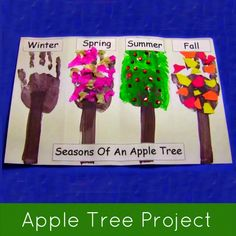 Seasons of an apple tree project ... great for introducing the four seasons.