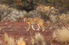 Lions Live, Saltwater Crocodile, Komodo Dragon, Apex Predator, Photo Competition, Great White Shark, Wild Dogs, Wildlife Conservation