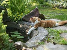 A couple of funny cats take an adventure in their own backyard. Does your cat have adventures in the back yard or do you keep your baby inside where it's nice and safe?