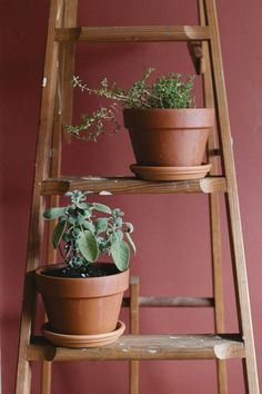 Step By Step: Moving Your Plants Indoors For Winter - Free People Clothing Boutique Blog