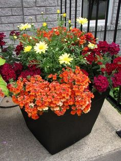 Wonderful Summer Container Garden Flower Ideas Seasonal flowering plants could be brought out whenever they're at their extreme attractiveness and subsequently removed to be substituted along . Container Flowers, Flower Planters, Container Plants, Garden Planters, Container Gardening, Flower Pots, Flower Ideas, Indoor Gardening Supplies, Gardening Tips
