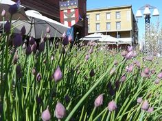 Summer in Truckee, California is just Perfect! from Truckee Travel Guide Truckee California, Outside Bars, Summer Activities, Evergreen, Nevada, Wilderness, Travel Guide, America, Explore