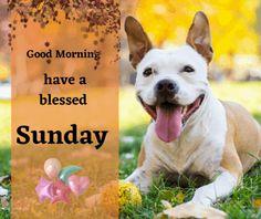 70 Gambar Sunday Wishes Terbaik Di 2020 Happy Sunday Anjing Husky Shiba Inu