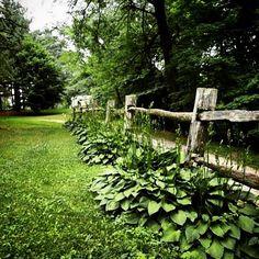 In an Ohio garden #ohio #garden #outdoors #nature #naturelover #gardening #beautiful #beauty #outdoors