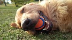 cute-overload: This is what pure joy looks like! Meet Cheese. The happiest boy in the world!http://cute-overload.tumblr.com