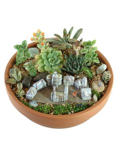Mini garden with succulents