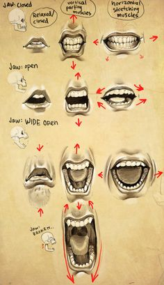 Expressions- Mouth + Jaw || CHARACTER DESIGN REFERENCES | Find more at https://www.facebook.com/CharacterDesignReferences
