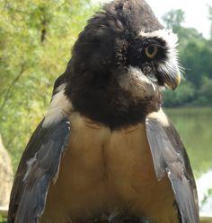 Bird / Pájaro - Minnesota Zoo