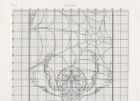 """Gallery.ru / Marishecka - Альбом """"Spider Banner"""""""