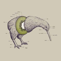 therainingkiwi: 10thcloctor: you can't even understand how many years i have waited for a picture like this you really can't fucking understand kiwis are always relevant on my blog.