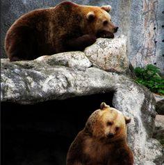 Satu Ylävaara | Photographer, Media Designer, Journalist | Bio & Portfolio Lost In Translation, Brown Bear, Professional Profile, Artwork, Photography, Animals, Design, Work Of Art, Photograph