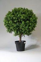 Boxwood Topiary x1944 70cm