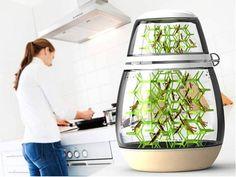 Lepsis: terrarium para criação de inseto comestível em casa