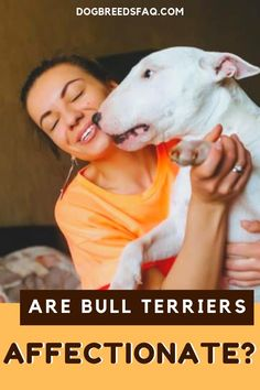 Bull Terriers are tough-looking, but they are highly affectionate, playful, and even goofy. #bullterriers