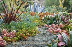 Companion plants for succulents  Debra Lee Baldwin