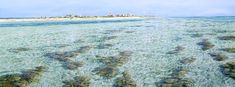 Artwork painting shallow waters - Larry Mitchell - Coming Into Westside