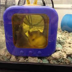Before bringing your hamster home, set up its cage with food and appropriate accessories, like this hamster cubby, for a more comfortable transition to a new home.