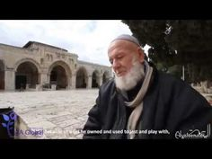 This Old Man has been feeding Kittens for over 40 years near Masjid al Aqsa - True Message of Peace - Cute Kittens Videos Cute Kitten Gif, Kittens Cutest, Feeding Kittens, Inspirational Videos, Old Men, 40 Years, People Around The World, Boys Who, Peace And Love