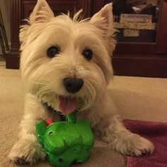 Lucy's new toy minus the squeaker