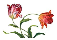Цветы PNG clipart_lis в AUDIT_ (69 штук) | Лобзики Проекты