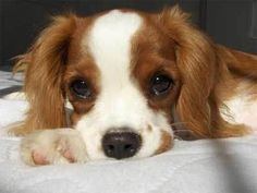 images of cute puppies | Your dose of cute puppy eyes