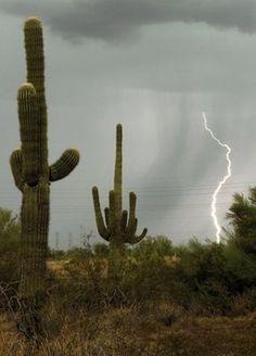 Saguaro Cactus During Summer Storm