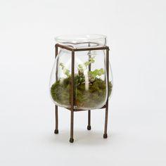 Freeform Bubble Terrarium, Large in Gardening PLANTERS Terrariums Vessels at Terrain