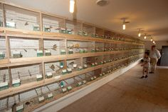 bird breeding cages with photo