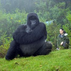 The Dian Fossey Gorilla Fund leads the world in protecting and studying gorillas, while helping communities build their conservation capabilities. Animals For Kids, Animals And Pets, Baby Animals, Gorillas In The Mist, Dian Fossey, Bass Fishing Shirts, Silverback Gorilla, Wildlife Biologist, Animales