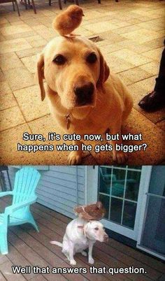 Funny Animal Pictures Of The Day – 20 Pics - Lustig humor - Animal world Funny Animal Jokes, Funny Dog Memes, Really Funny Memes, Cute Funny Animals, Funny Animal Pictures, Cute Baby Animals, Funny Cute, Funny Dogs, Super Funny